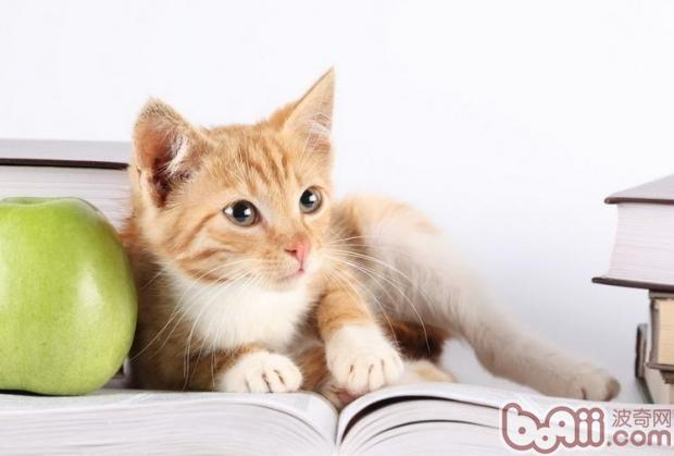 猫咪剃毛的方法和工具-猫咪美容